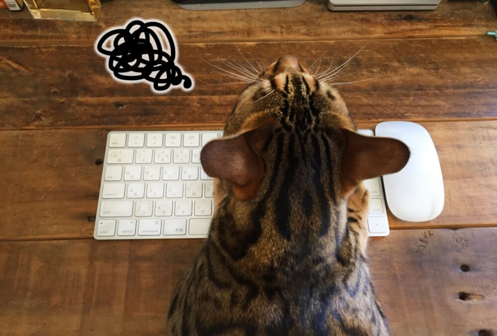 パソコンの操作で戸惑う猫