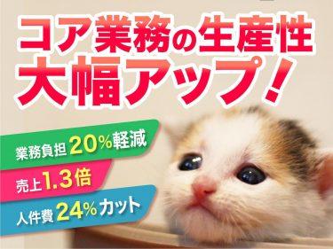 IT業務の効率化について考える子猫