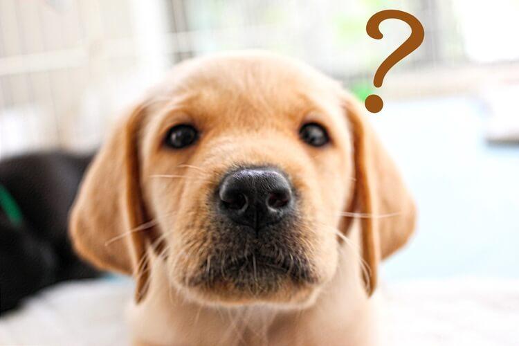 情シスのアウトソーシングついて疑問を浮かべる犬